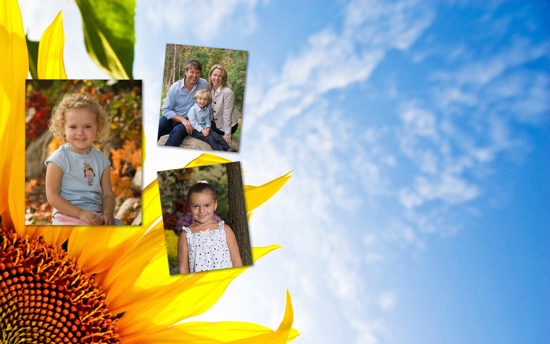 sunflower website header